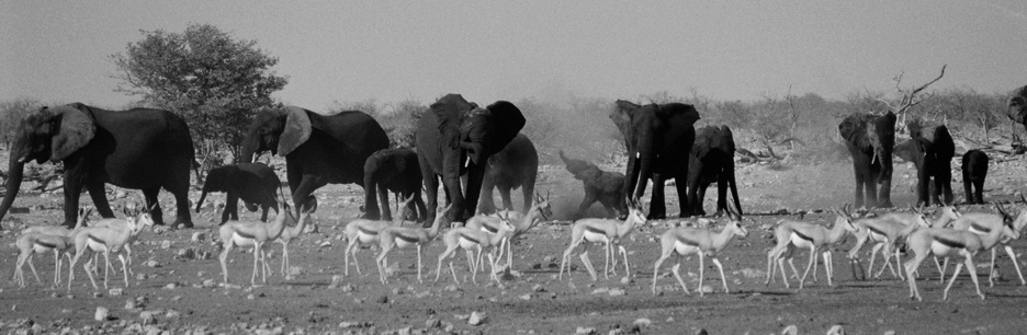 elephant gazelle etosha News, Lectures & Screenings