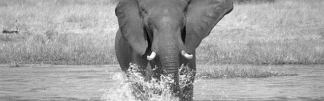 christo-wilkinson-photography-elephants