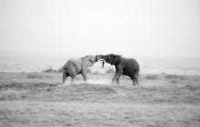d-Baby Elephants