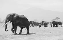 i-christo-elephants