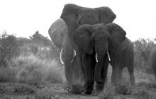 j-elephant-family