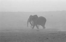 s-elephants-dusty2