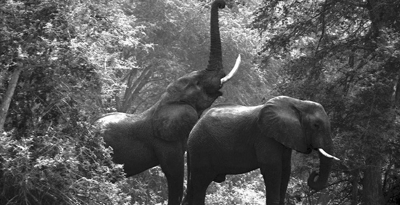 Endangered Elephant, Tribal & Predator Photography by Christo & Wilkinson