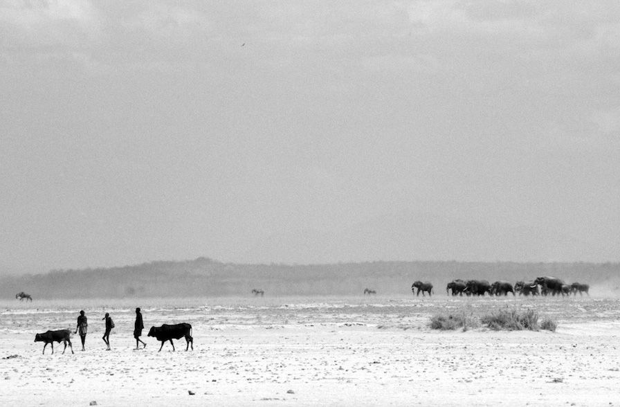 """Convergence of the Tribes,"" Amboseli, Kenya, 2007"