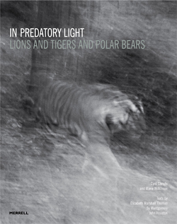 BOOK: In Predatory Light by Cyril Christo & Marie Wilkinson