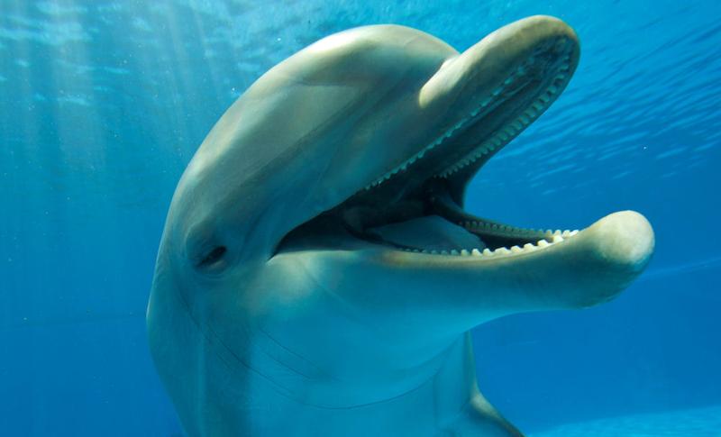 baby baiji river dolphin