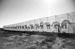 Stop Killing Elephants