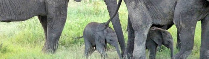 Cyril Christo Save our Elephants