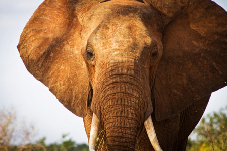 Cyril Christo Save our Elephants