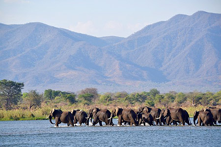 Cyril Christo Elephant Extinction