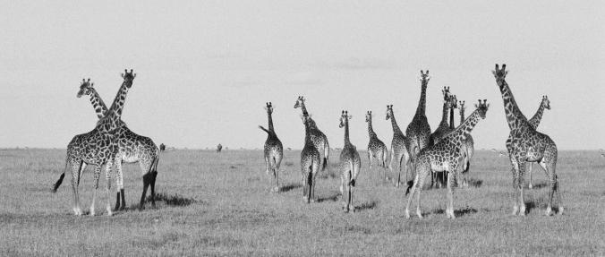 Cyril Christo - Conservation Blog