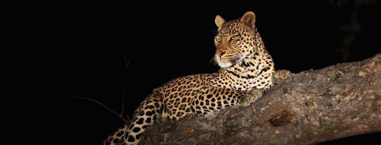 Cyril Christo Conservation Blog