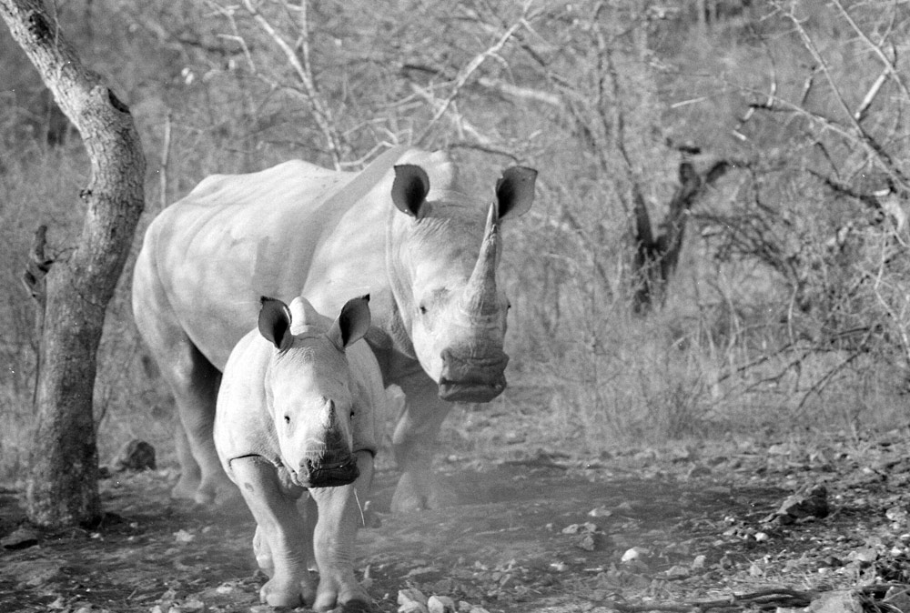 ©Rhino Conservation Photography Cyril & Lysander Christo