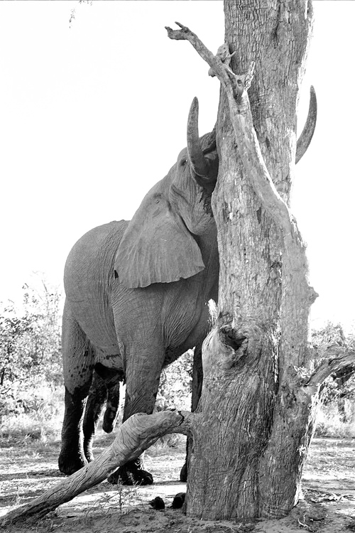 ©Elephant Conservation Photography Lysander Christo