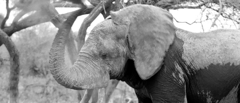 ©WALKING THUNDER FILM - Elephant Conservation