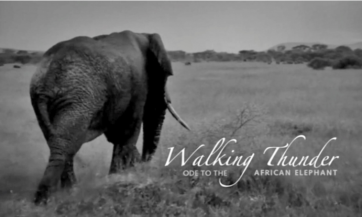 WALKING THUNDER FILM 2018 - Christo & Wilkinson