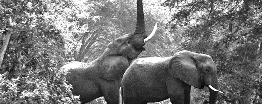 Christo-Wilkinson Elephant Photography
