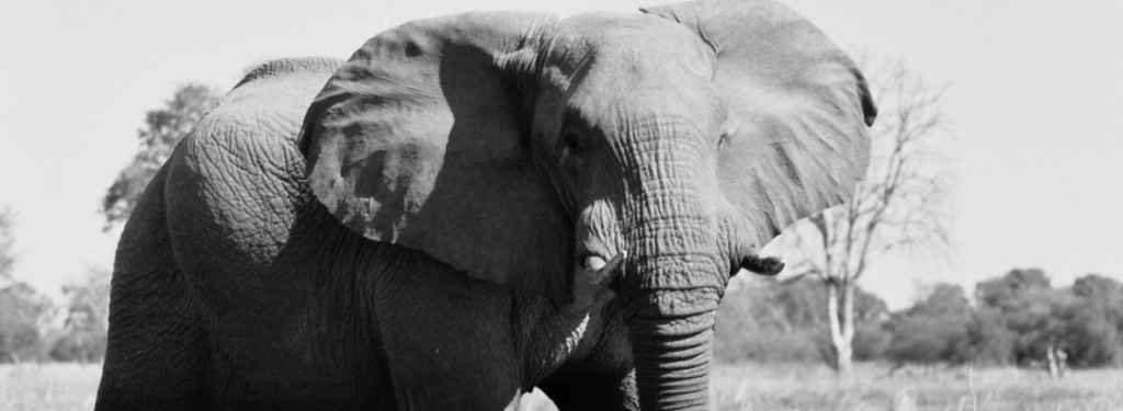 Save the Elephants Conservation Blog