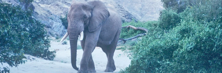 Dam threat to elephants - Himba
