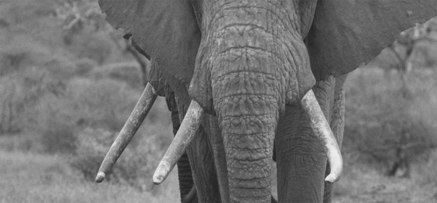 Letter to Botswana - Cyril Christo Blog