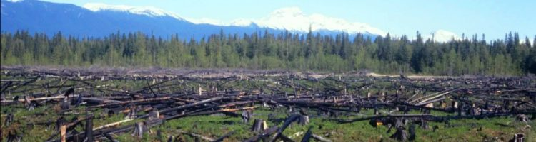 Trump administration has proposed overturning the Roadless Rule that prohibits logging in the massive forest