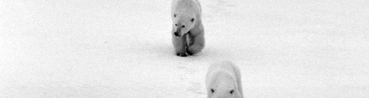 Arctic National Wildlife Refuge & Trump's Plan to Destroy it