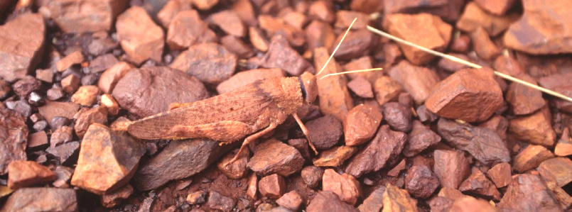 Insects face a perilous decline. CHRISTO CONSERVATION BLOG