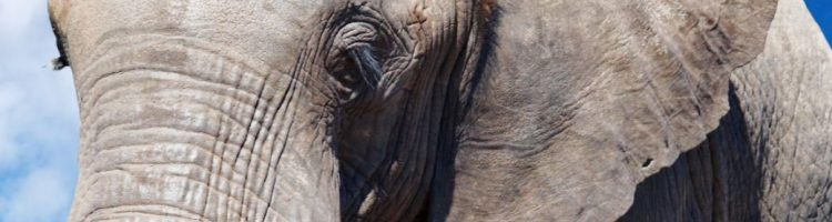 Walking Thunder: Ode to the African Elephant - CHRISTO CONSERVATION BLOG