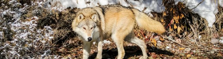 From trophy hunting to trapping and wolf hunts, wildlife is under siege.